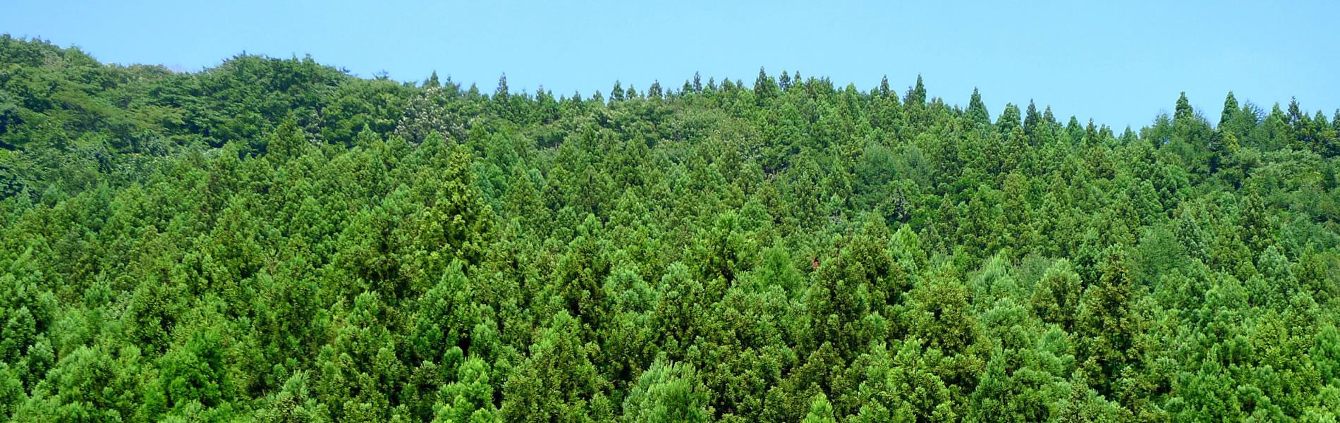 木を使おう。