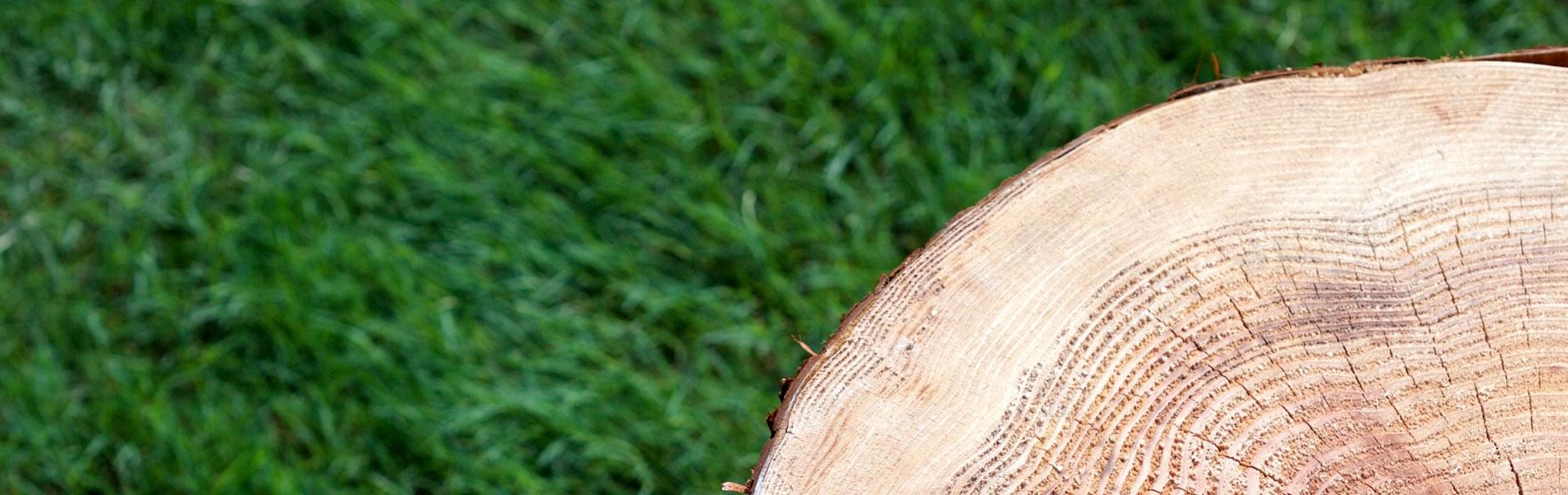 地域の木を使おう